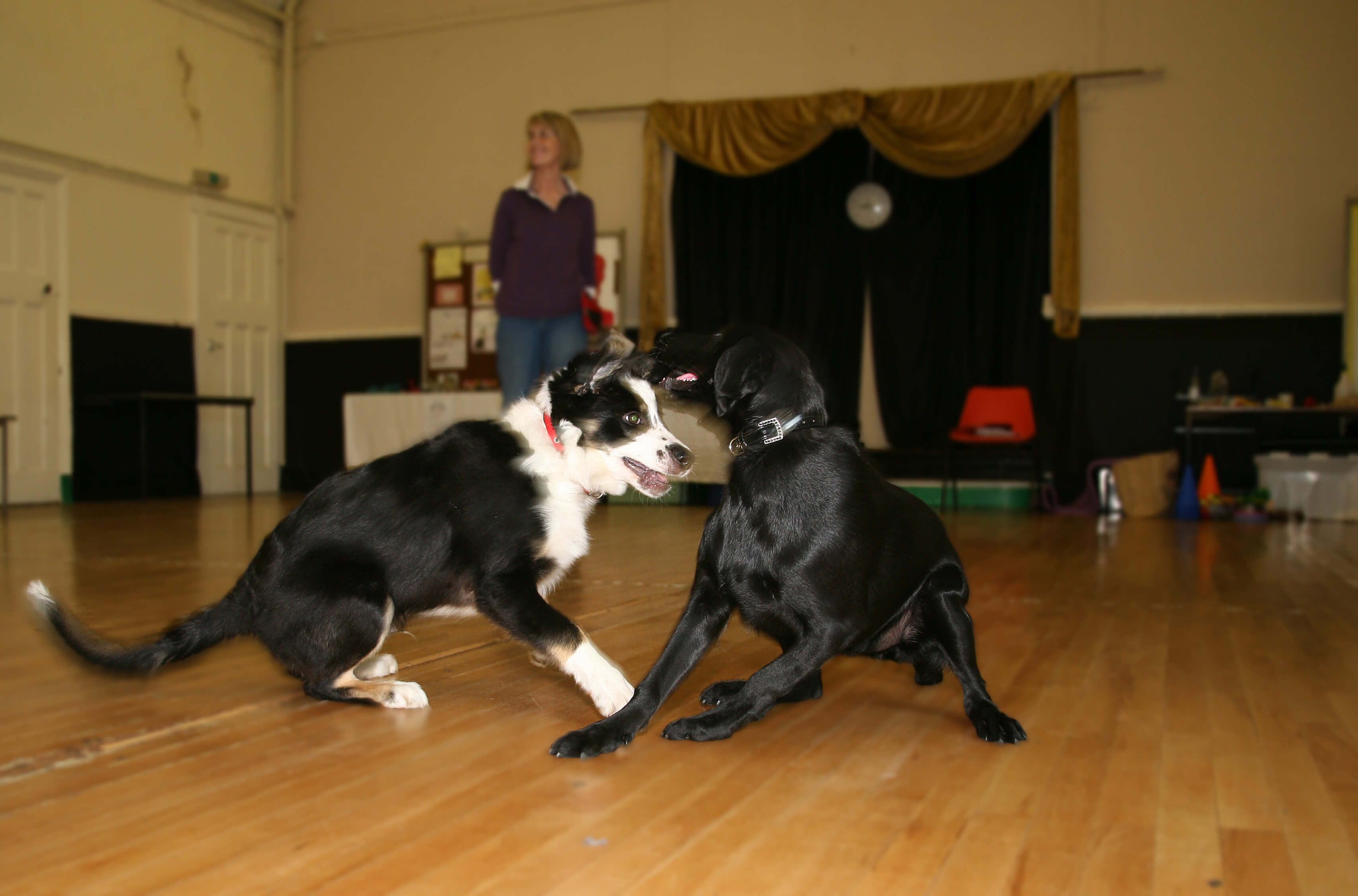 Puppy Play – Getting it Right